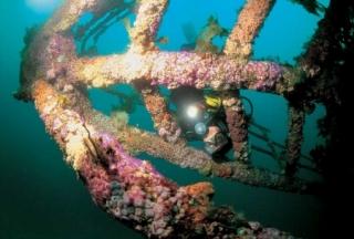 Rainbow Warrior Scuba Diving