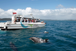 Dolphin Cruise - departs from Paihia