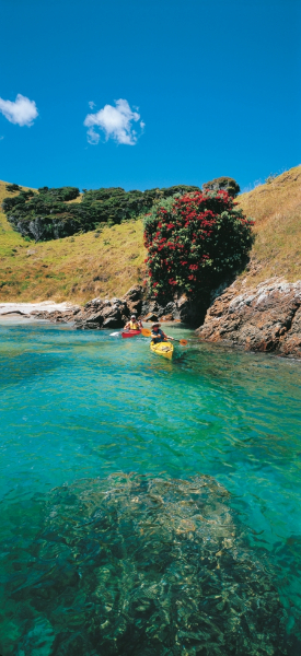 Sea Kayaking - Bay of Islands
